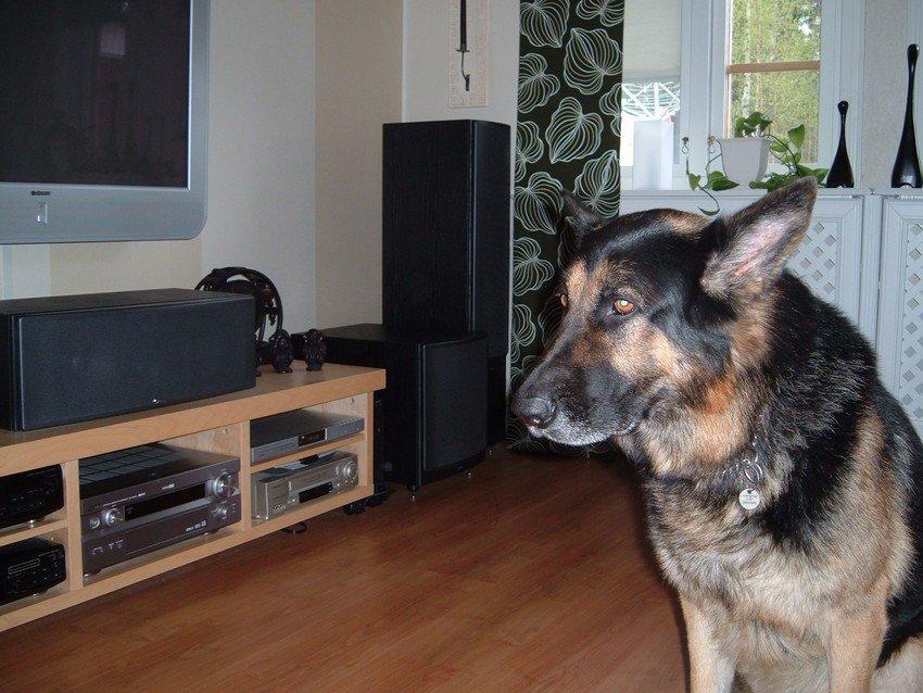 Abbe vakthund