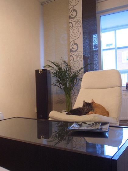 Vänster front och våra två katter som myser :)