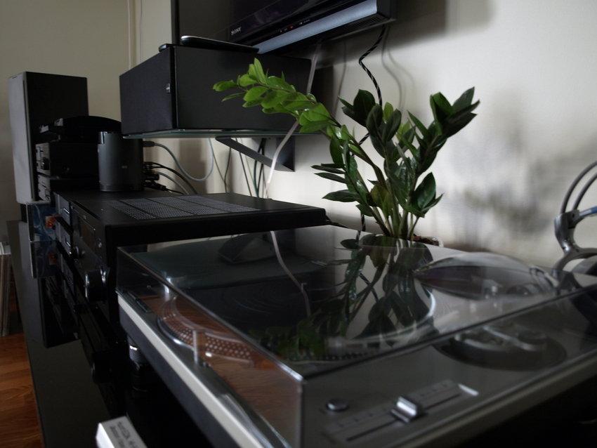 Växten trivs bra bakom skivspelaren...