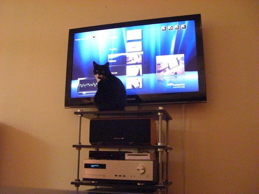 Katten verkar fundersam...