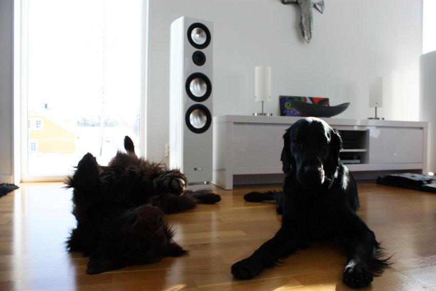 vita högtalare