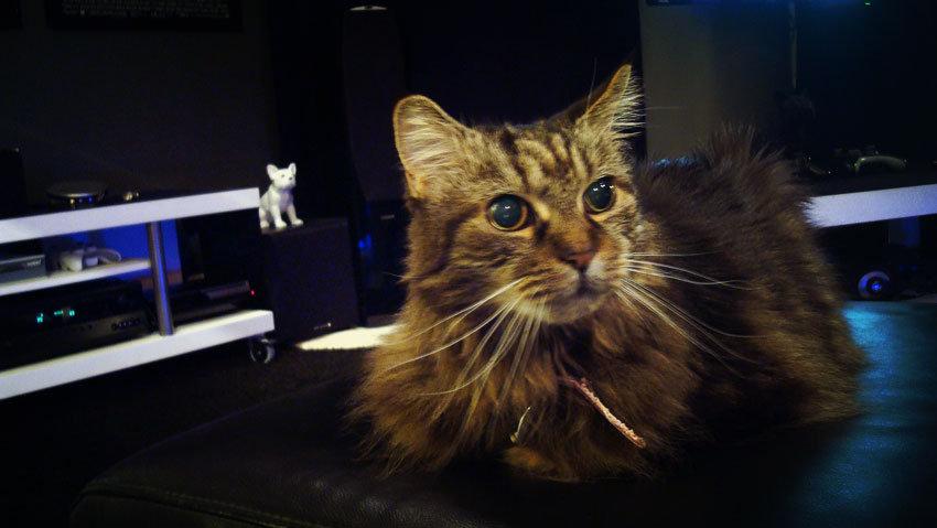 Katten Tess