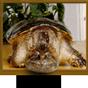 Tips på ny MCE fjärr! - senaste inlägg av Tiny Turtle